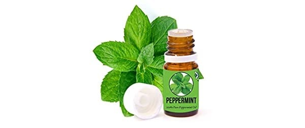 Aromazotika Peppermint Essential Oil | Best Tea Tree Oil