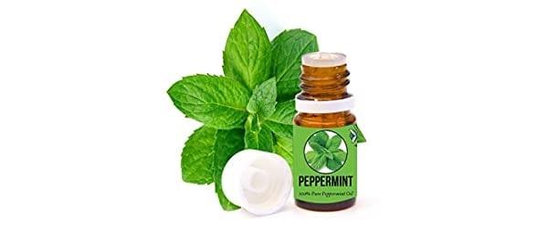 Aromazotika Peppermint Essential Oil | Best Tea Tree Oil